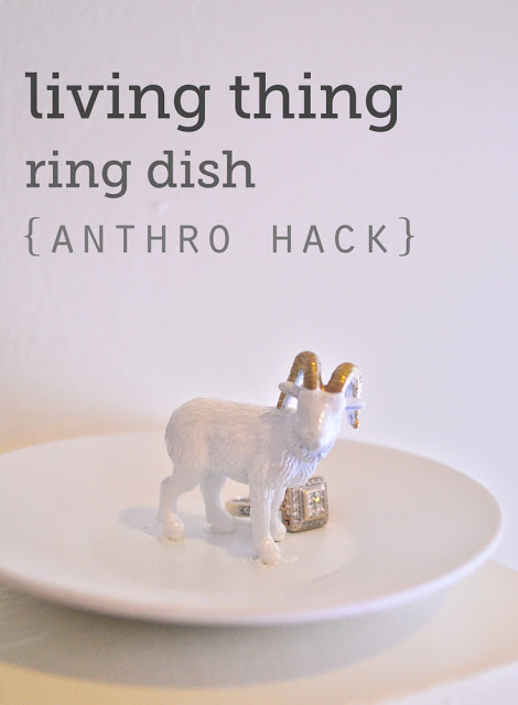 living_thing_ring_dish
